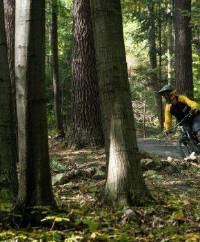 Società di noleggio mountain bike