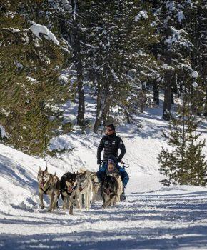 Balade en chiens de traîneau made in Ariège