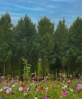 S'émerveiller au jardin extraordinaire à Lieurac