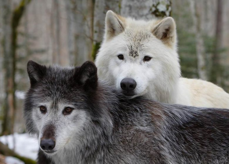 The House of Wolves