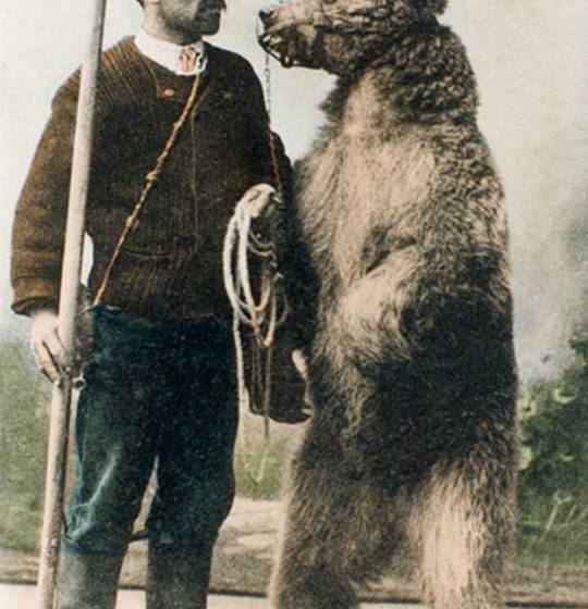 """TENTOONSTELLING """"THE BEAR WATCHES"""""""