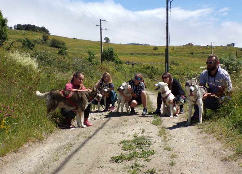 Canine walking with Husky escape